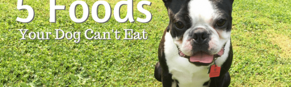 5 Lesser-Known Foods That Are Dangerous to Your Dog