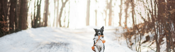 Cold Weather Checklist to Keep Your Pets Safe This Winter