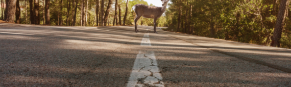 4 Facts about Deer Pennsylvania Drivers Should Know